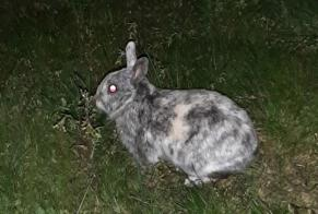 Discovery alert Rabbit Unknown Baraqueville France