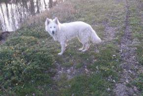 Disappearance alert Dog  Male , 1 years Vitry-aux-Loges France