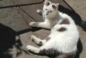 Discovery alert Cat Male Moulins France