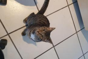 Discovery alert Cat Male Toulouse France