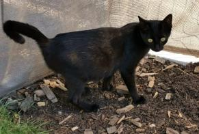 Discovery alert Cat Female Olonne-sur-Mer France