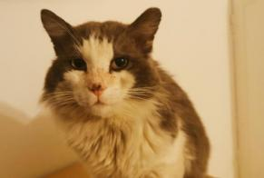 Discovery alert Cat Male , 10 years Marseille 13e Arrondissement France