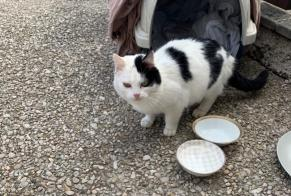 Discovery alert Cat Female Auteuil France