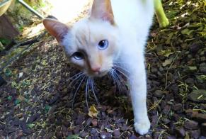 Disappearance alert Cat miscegenation Male , 3 years Versailles France