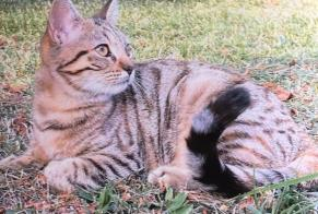 Disappearance alert Cat Female , 1 years Bernin France