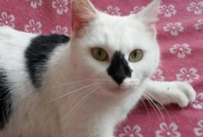 Discovery alert Cat miscegenation Female Argenteuil France