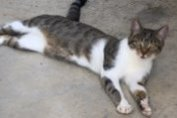 Disappearance alert Cat Female , 4 years Angers France