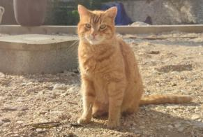 Discovery alert Cat Male , 6 years Mehun-sur-Yèvre France