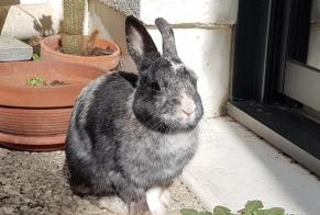 Discovery alert Rabbit Female Rennes France
