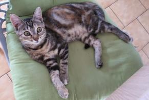 Disappearance alert Cat miscegenation Female , 1 years Mours France