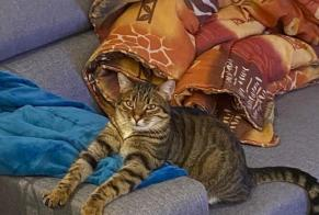 Disappearance alert Cat  Male , 4 years Royas France
