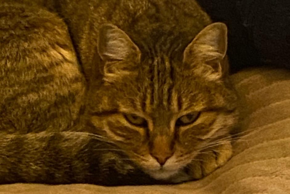 Disappearance alert Cat  Female , 7 years Nice France
