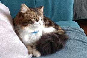 Disappearance alert Cat Male , 2 years Pontoise France