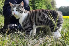 Discovery alert Cat Male Charny Orée de Puisaye France