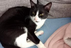 Disappearance alert Cat  Male , 2 years Flévy France