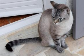 Disappearance alert Cat  Male , 5 years Feneu France