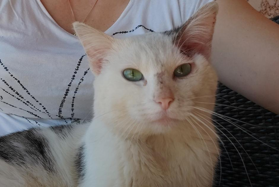 Discovery alert Cat miscegenation Male , 3 years Fronton France