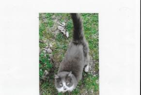 Discovery alert Cat miscegenation Unknown Labastide-Saint-Georges France