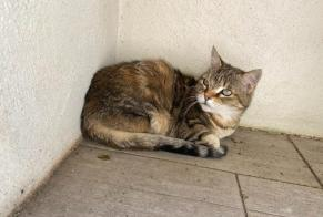 Discovery alert Cat Female Manduel France