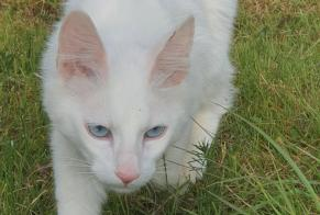 Discovery alert Cat Unknown Dampierre-en-Yvelines France