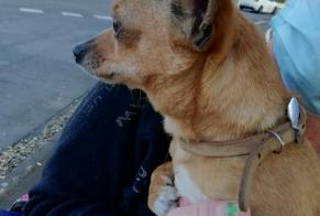 Discovery alert Dog  Male Tarbes France