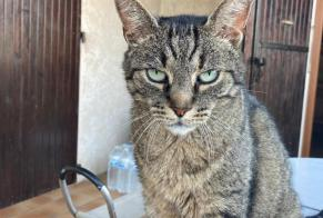 Disappearance alert Cat Male , 11 years Marseille 15e Arrondissement France