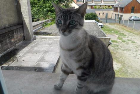 montfort chat Chatter en ligne à montfort-sur-meu-france des rencontres parmi le 330 m de membres sur badoo, à montfort-sur-meu fais-toi des amis à montfort-sur-meu sur badoo.