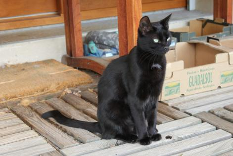 Alerte Disparition Chat Femelle , 7 ans Saint-Alban-Leysse France