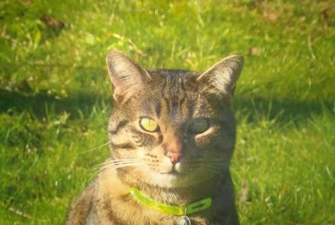 Petalert d tails de l 39 alerte disparition chat rue du pr for Garage gresillons saint ouen l aumone avis