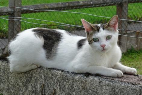 Alerte Disparition Chat Mâle , 3 ans Giberville France