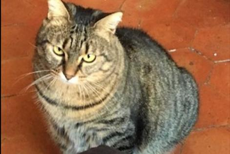 Alerte Disparition Chat Femelle , 4 ans Le Tholonet France