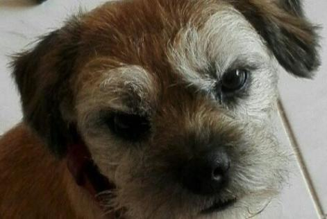 Alerte Disparition Chien  Mâle , 10 ans Paris France