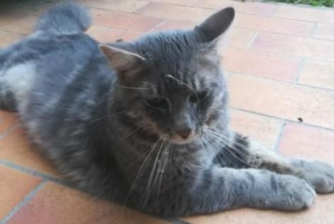 Alerte Disparition Chat  Mâle , 1 ans Noisy-le-Grand France