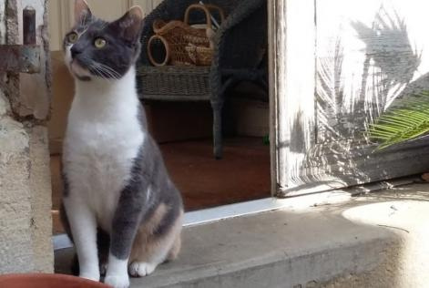 Alerte Disparition Chat  Femelle , 2 ans Chinon France