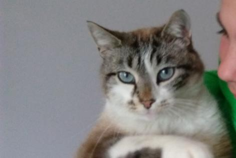 Alerte Disparition Chat Mâle , 7 ans Seynod France