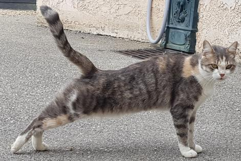 Alerte Disparition Chat Femelle , 4 ans Valencin France