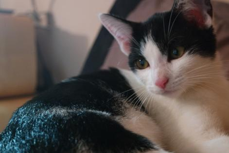 Alerte Disparition Chat Femelle , 1 ans Douelle France