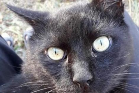 Alerte Disparition Chat Mâle , 9 ans La Devise France