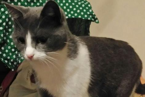 Alerte Disparition Chat Femelle , 2 ans Caniac-du-Causse France