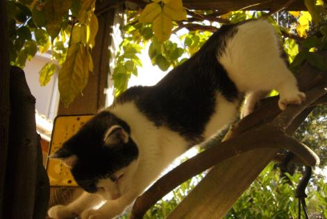 Alerte Disparition Chat Femelle , 6 ans Toulouse France