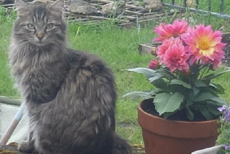 Alerte Disparition Chat Mâle , 1 ans Le Blanc France