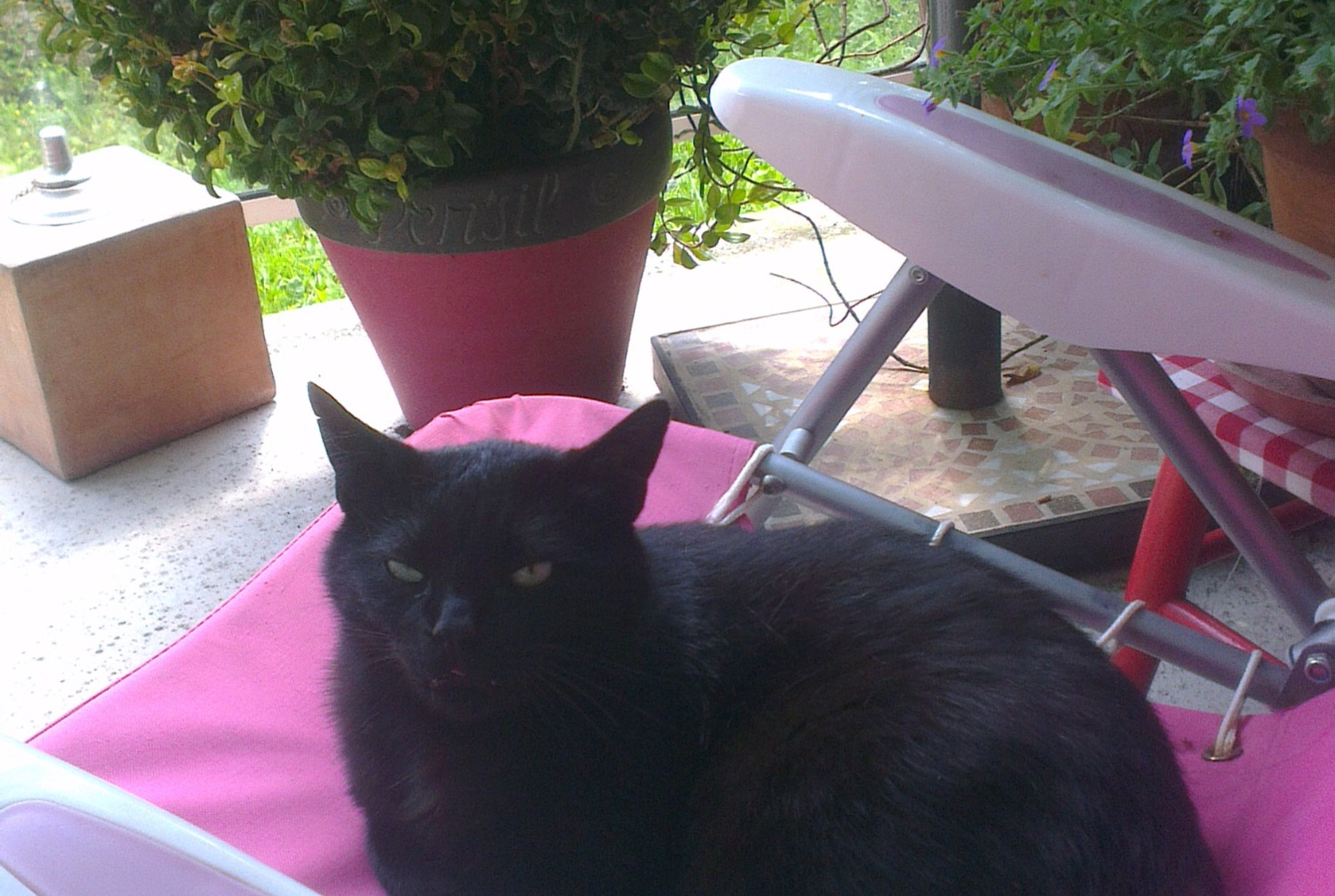 Alerte Disparition Chat Mâle , 7 ans Gerstheim France