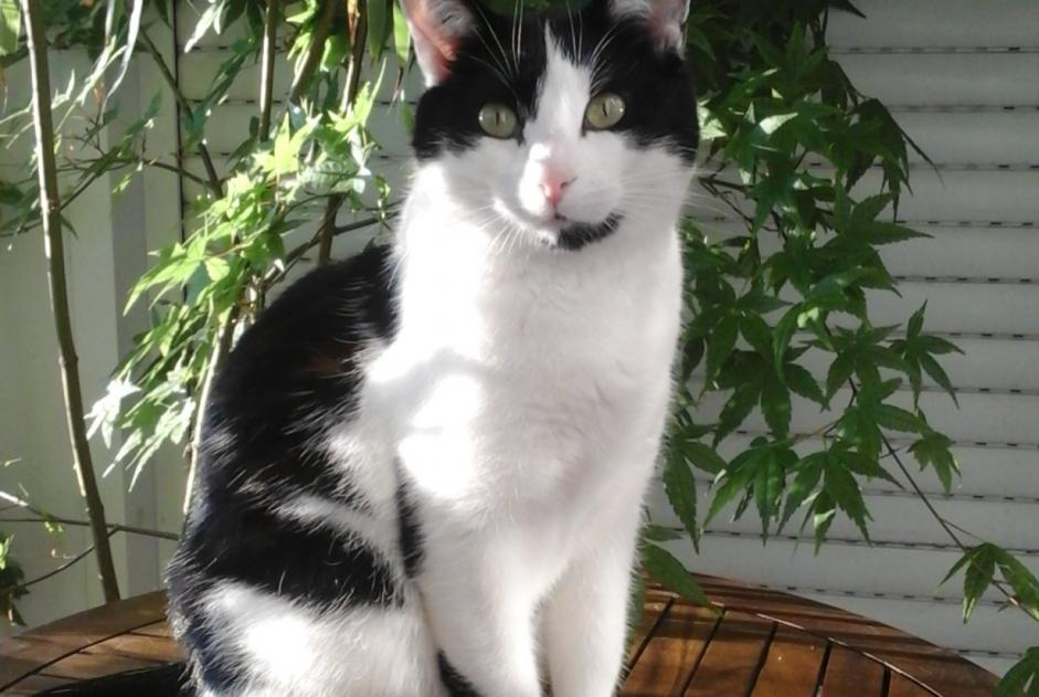 Alerte Disparition Chat Femelle , 7 ans Chessy France