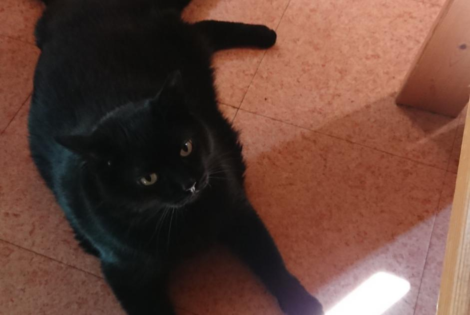 Alerte Disparition Chat Femelle , 9 ans Seppois-le-Bas France