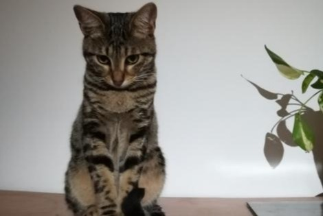 Alerte Disparition Chat  Mâle , 2 ans Allauch France