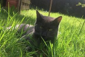 Alerte Disparition Chat  Mâle , 1 ans Loir en Vallée France