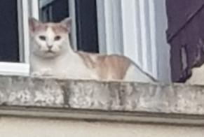 Alerte Disparition Chat Mâle , 1 ans Pardaillan France