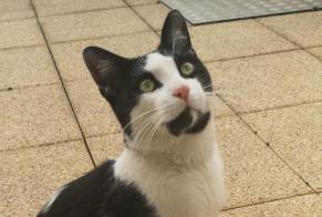 Alerte Disparition Chat Mâle , 1 ans Stotzheim France