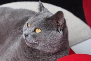 Alerte Disparition Chat  Femelle , 6 ans Basse-Goulaine France