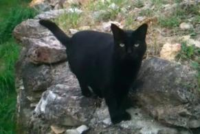 Alerte Disparition Chat Mâle , 15 ans Nouan-le-Fuzelier France